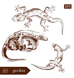Geckos lizard Hand drawn Can vector image