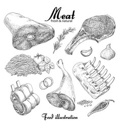 Set of hand drawn meat isolated on white vector