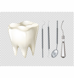 tooth and dental equipments vector image vector image