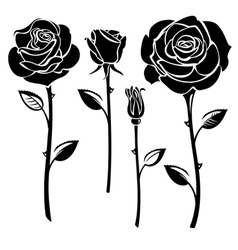 Black and white roses vector