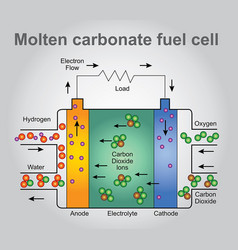 molten carbonate fuel cells process vector image vector image
