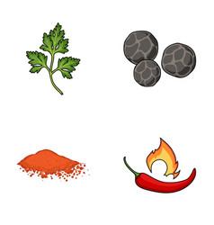 Ptrushka black pepper paprika chiliherbs and vector