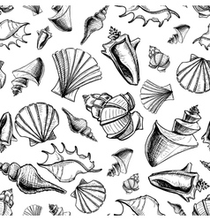 Sea shells sketch background vector image
