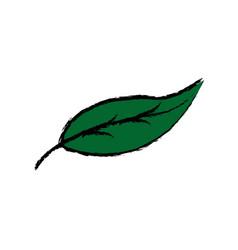 Leave nature botanical foliage plant vector
