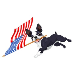 Boston terrier running flag vector