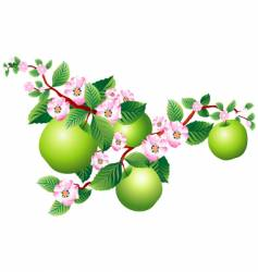 Apple blossom vector