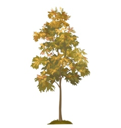 Acacia autumnal tree and grass vector image vector image