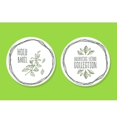 Ayurvedic herb - product label with holy basil vector
