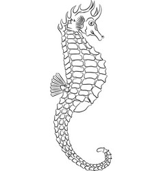 Seahorse outline vector