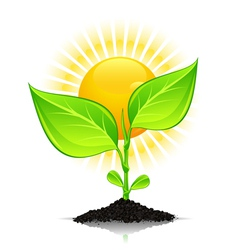 New plant growth vector