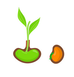 Plant growing from seed start of new life concept vector