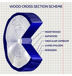 Sketch of wood cross section scheme vector