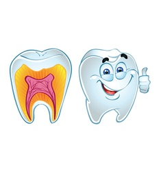 teeth smiling and teeth in section vector image