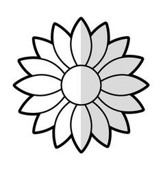 cute sunflower decorative icon vector image