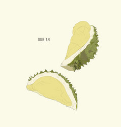 durian king of fruit sketch vector image vector image