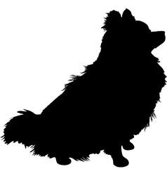 pomeranian silhouette vector image vector image