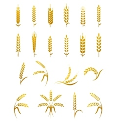 Wheat ear icon set vector image vector image