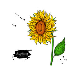 Sunflower flower drawing hand drawn vector