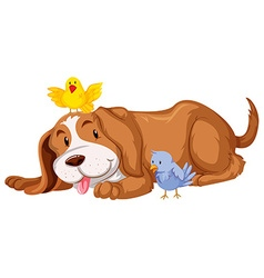 Pet dog with two birds vector image