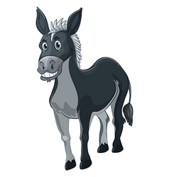 Donkey with gray fur vector image vector image