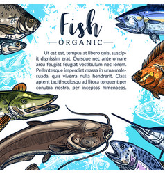 Poster of fish catch for fishing market vector