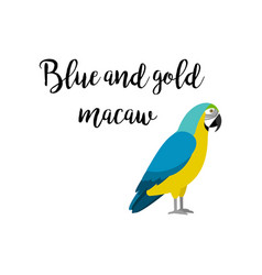 blue and gold macaw parrot bird vector image