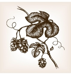 Branch of hops hand drawn sketch style vector image