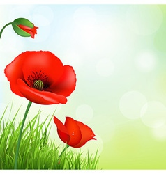 Red Poppy And Green Grass vector image
