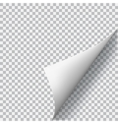 Curled corner of paper vector