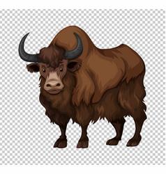 Buffalo with long hair vector