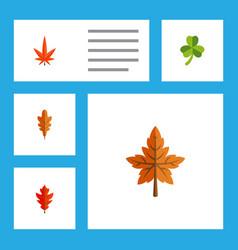 Flat icon leaf set of leaf linden frond and vector