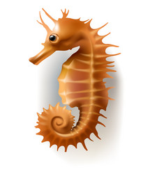 Badges stickers sea horse vector
