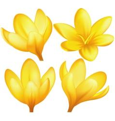 Set of yellow crocuses vector