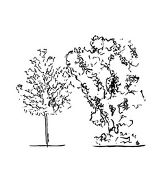 set of trees black and white in silhouettes vector image