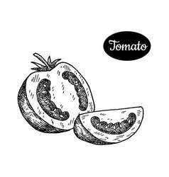 Hand drawn sketch style tomato vector