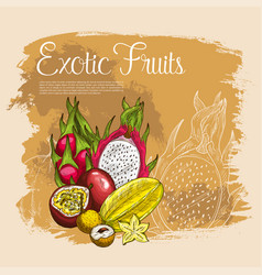 Poster of exotic tropical fruits vector