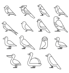 bird ilustration collection vector image vector image