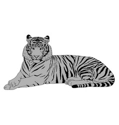 tiger head vector image vector image