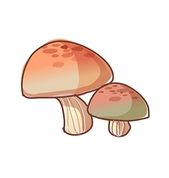 A view of mushrooms vector image