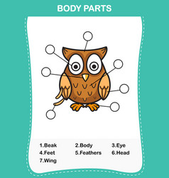 Owl vocabulary part of body vector