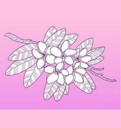 Plumeria flowers fashion vector