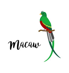 exotic tropical macaw bird vector image