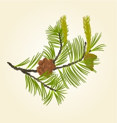 Blooming pine tree and pine cones vector