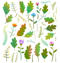 Leaves foliage flowers forest collection vector