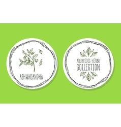 Ayurvedic herb - product label with ashwagandha vector