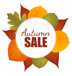 autumn sale icon vector image vector image
