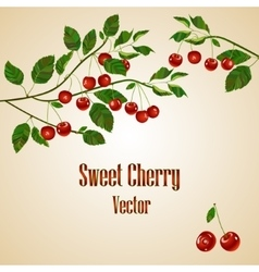 Cherry card with place for your text vector