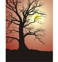 oak tree vector image vector image