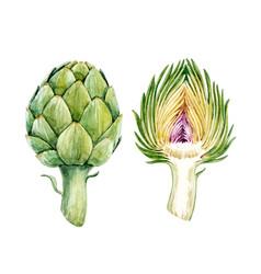 Watercolor artichoke set vector