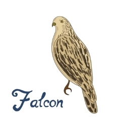 Bird falcon vector